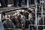 Bull Riders Photos - Cowboys Cowboys Everywhere... by Amber Kresge