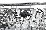 Tag Artist Prints - Cows Pencil Sketch Print by Thomas Woolworth