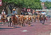 Stockyards Posters - Cowtown Cattle Drive Poster by David and Carol Kelly