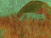 Robert Ball - Coyote in the Grass