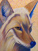Coyote Framed Prints - Coyote Summer Framed Print by Brian  Commerford