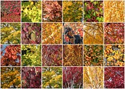 Colors Of Autumn Photo Posters - Cozy Autumn Leaves Collage Poster by Carol Groenen