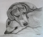 Graphite  Drawings Paintings - Cozy by Diana Black