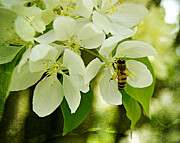 Carol Toepke Prints - Crab-apple Blossoms and Honey Bee in Paint Print by Carol Toepke