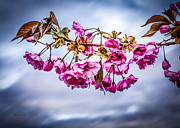 Season. Sky. Clouds Prints - Crab Apple Tree Print by Bob Orsillo