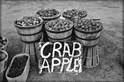 Farm Stand Digital Art Posters - Crab Apples Poster by Digital Reproductions