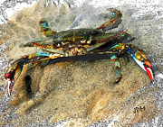 Joan Mccool Metal Prints - Crab Sketch Photo Metal Print by Joan McCool