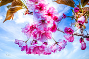 Crab Apple Tree Blossoms Prints - Crabapple Impressions Print by Bob Orsillo