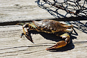 Louisiana Seafood Art - Crabbin at the Lakefront by Laura Mehaffey Photography