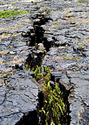 Hawaii Volcanoes National Park Posters - Crack in the Lava Poster by Christi Kraft