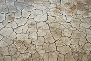 Patricia Hofmeester - cracked clay earth