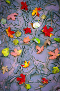 Cracked Mud And Leaves Print by Inge Johnsson