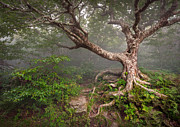 Fantasy Tree Art Prints - Craggy Gardens Blue Ridge Parkway Asheville NC - Enduring Craggy Print by Dave Allen