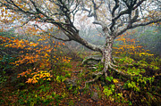 Wnc Posters - Craggy Gardens North Carolina Blue Ridge Parkway Autumn NC Poster by Dave Allen