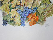 Vineyard Art Painting Posters - Cran-Grapes Poster by Gregory Peters