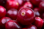 Juicy Posters - Cranberry closeup Poster by Jane Rix