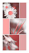 Assorted Digital Art Posters - Cranberry Flowers Collage Poster by Christina Rollo