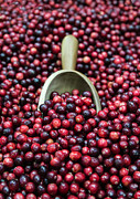 Grocery Store Prints - Cranberry Harvest Print by John Greim