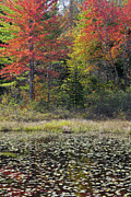 Alan L Graham - Cranberry Meadow Bog Fall
