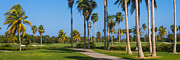 Green Key Park Framed Prints - Crandon Park Palms Framed Print by Ed Gleichman