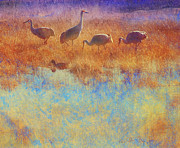 Apache Blue Framed Prints - Cranes In Soft Mist Framed Print by R christopher Vest