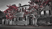 Andrew Crispi Metal Prints - Crape Myrtles in Historic Downtown Charleston 1 Metal Print by Andrew Crispi