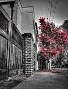 Andrew Crispi Framed Prints - Crape Myrtles in Historic Downtown Charleston 2 Framed Print by Andrew Crispi