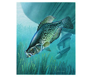 Lake Fish Framed Prints - Crappie and Boat Framed Print by JQ Licensing