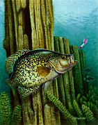 Crappie And Posts Print by Jon Q Wright