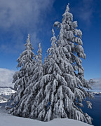 Crater Lake Prints - Crater Lake Trees  Print by Todd Kreuter