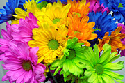 Blossom - Crazy Daises - Spring Flowers - Bouquet - Gerber Daisy Wanna Be 1 by Andee Photography