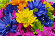 Crazy Posters - Crazy Daises - Spring Flowers - Bouquet - Gerber Daisy Wanna Be 3  Poster by Andee Photography
