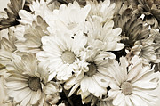 Fragrance Mixed Media Prints - Crazy Daises - Spring Flowers - Bouquet - Gerber Daisy Wanna Be - B W  Print by Andee Photography