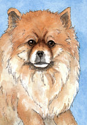 Pomeranian Framed Prints - Cream Pomeranian dog  Framed Print by Cherilynn Wood