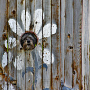 Doggy Cards Prints - Creative Dog Fence Print by Janice Rae Pariza
