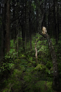 Forest At Night Prints - Creature Of The Night Print by Bill  Wakeley
