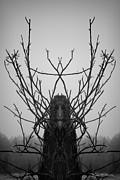 David Gordon - Creature of the Wood BW