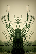 Warm Digital Art - Creature of the Wood by Dave Gordon