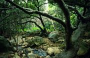 Creek In Woods Print by Kathy Yates