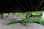 Kudzu Framed Prints - Creepin Framed Print by Off The Beaten Path Photography - Andrew Alexander