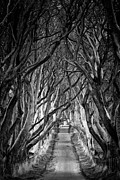 Creepy Dark Hedges Print by Nigel R Bell