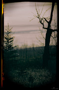 E Black Framed Prints - Creepy Tree Framed Print by Paul Howard