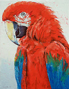 Amazon Parrot Paintings - Crimson Macaw by Michael Creese