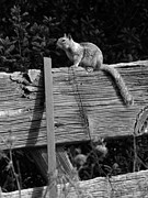 Robert Ball - Critter on a Fence