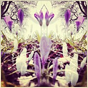 Mauve Photos - #crocus #fantasy. .. #flowers #floral by Alexandra Cook
