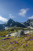 Art Prints Photos - Crocus in the mountain by Lyubomir Kanelov