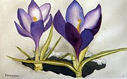 Robert Havens - Crocus n Snow