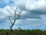Bare Trees Metal Prints - Crooked Tree on Crooked Island Metal Print by Julie Dant