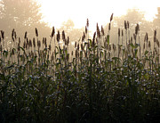 Haze Metal Prints - Crops in Fog Metal Print by Olivier Le Queinec