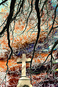 Catholic Art Photo Originals - Cross and Bare Tree Limbs New Cathedral Cemetery Baltimore Maryland by John Hanou